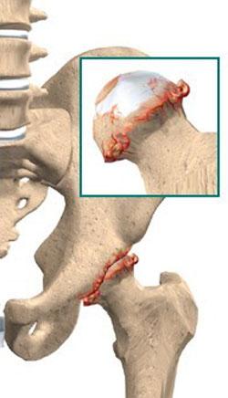 движение в плечевом суставе обеспечивают мышцы
